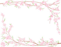 Branch of apple-tree. Vector frame of a bloooming branch of an apple-tree Royalty Free Stock Images