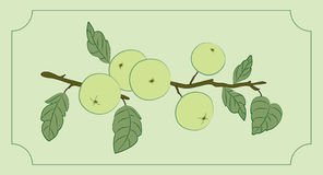 Branch of apples. Illustration of apple branch in frame Stock Photos
