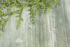 The branch of arborvitae. On the green wooden background. Place for text, top view. Wood frame with space Stock Images