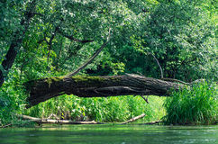 Branch as bridge over the water Royalty Free Stock Images