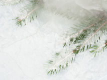 Branch ate frozen in ice Royalty Free Stock Photography