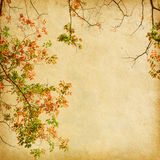 Branch of autumn leaves Stock Photos
