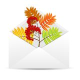 Branch with autumn leaves and berries of wild ash in an envelope Stock Photos