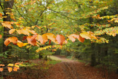 Branch with autumn leaves in forest Stock Images