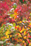 Branch with autumn leaves Stock Photo