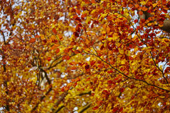 Branch with autumn leaves Stock Images