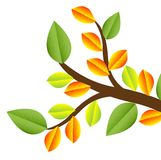 Branch with autumn leaves on a white background Royalty Free Stock Image