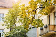 A branch of an autumn tree against a window Stock Photos