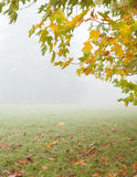 Branch of autumn tree and meadow in the mist Royalty Free Stock Photo