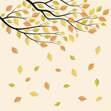 Branch of autumn tree. Royalty Free Stock Image