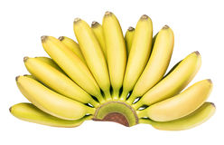 Branch of baby bananas isolated on white background Royalty Free Stock Image