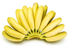Branch of baby bananas isolated on white background Royalty Free Stock Photography