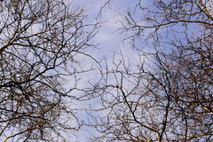 Branch of bald trees in winter with blue sky. Cloudy sky, no leaves Royalty Free Stock Photography