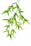 Branch of bamboo. High resolution image of wet bamboo-leaves isolated on a white background. Please take a look at my similar bamboo-images stock photography