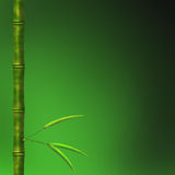 Branch of a bamboo with leaves Royalty Free Stock Images