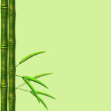 Branch of a bamboo with leaves Royalty Free Stock Photography