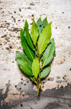 Branch of Bay leaf and pepper. On rustic background. Royalty Free Stock Image