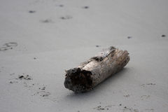 Branch on the beach. A photo of a branch on the beach royalty free stock photos