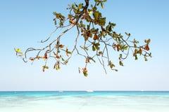 Branch on the beach. Phang nga , thailand Royalty Free Stock Photos