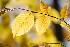 Branch of beautiful autumn leaves Stock Image