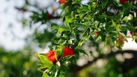 Branch of the beautiful green tree with red flowers. Close-up stock video