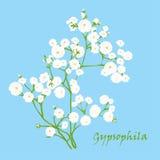Branch of beautiful hand-drawn gypsophila Royalty Free Stock Image