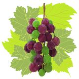 Branch of beautiful multi-colored low-poly grape framed by patterned leaves stock illustration