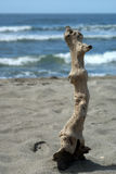 Branch been washed ashore Royalty Free Stock Photos