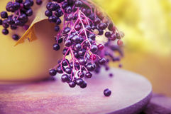 Branch with berries of an elder in yellow dish Royalty Free Stock Images