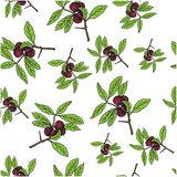 Branch with berries and green leaves on white blackground. Seamless colorful  pattern Royalty Free Stock Photo