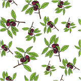 Branch with berries and green leaves on white blackground. Seamless colorful  pattern Royalty Free Stock Photos