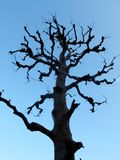 Branch of big tree Royalty Free Stock Image