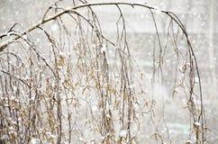 Branch of a birch Stock Photos