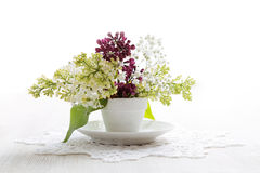 Branch of bird-cherry tree in a small white vase Stock Photography