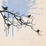 Branch with birds Royalty Free Stock Photography
