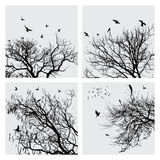 Branch and birds Royalty Free Stock Image