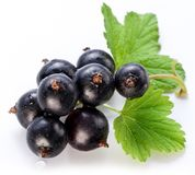 Branch of black currant Stock Images
