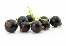 Branch of black currant fruits isolated stock images
