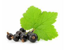 Branch of black currant fruits isolated Royalty Free Stock Image