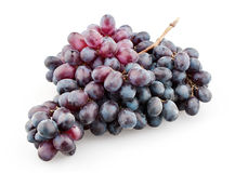 Branch of black grapes Royalty Free Stock Photos