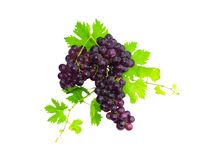 Branch of black grapes with green leaf. Isolated Royalty Free Stock Images