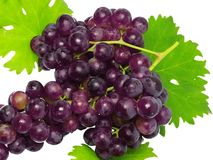 Branch of black grapes with green leaf. Isolated Royalty Free Stock Photography