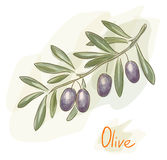Branch of black olives. Watercolor style. Royalty Free Stock Photography