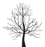 Branch Stock Photography