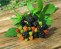 Branch of Blackberry with leaf Royalty Free Stock Images