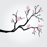 Branch in bloom. Royalty Free Stock Photo