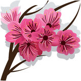 Branch of blooming cherry tree Sakura. Pink flowers royalty free illustration