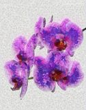 Branch of blooming orchid Royalty Free Stock Photography