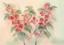 Branch of blooming quince watercolor Royalty Free Stock Images