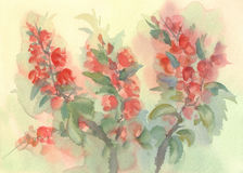Branch of blooming quince watercolor Royalty Free Stock Photos